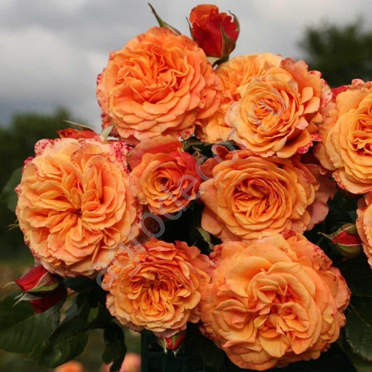 Цветы посылторги